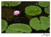 2010-02-05-chmai1_0006rs