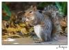 2009-12-15-squirrel_0039rs