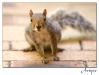 2009-12-15-squirrel_0081rs