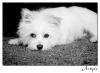 2012-01-08-animals_0022bwrs