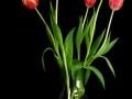 2014-09-05-Tulips_0007rs