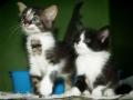 Cat1_DSC3776