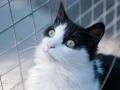 Cat2_DSC2904rs