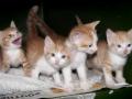 Cat2_DSC3801