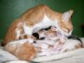 Cat4_DSC3866