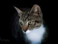 Cat6_DSC3060rs